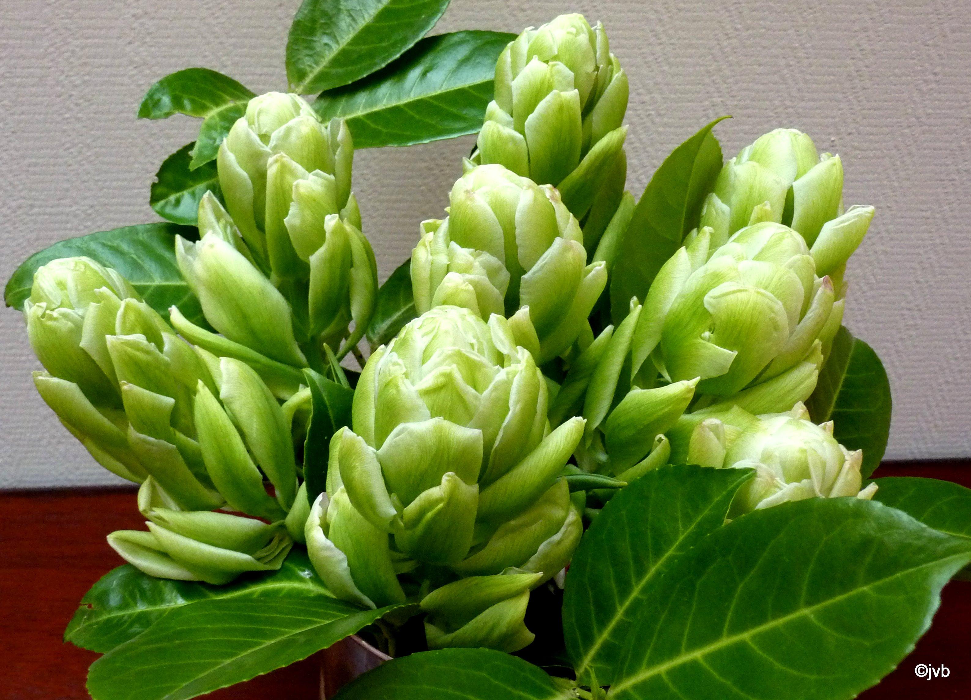 Paul van bentem bloembollen groen dubbel - Groen behang van het water ...